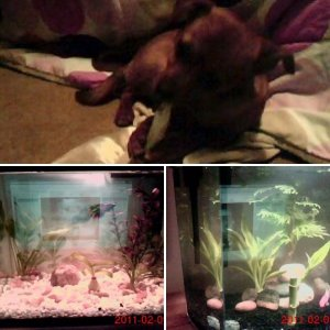 my fishies and the dog