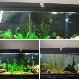 Tank progress log
