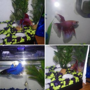 Moon and Midnight : My fishys