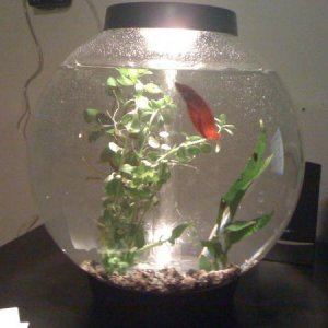 The new aquarium.