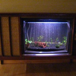 Planted 20 Gallon Console TV aquarium