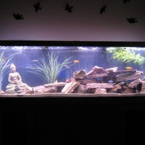 125 Gallon with the lights on
