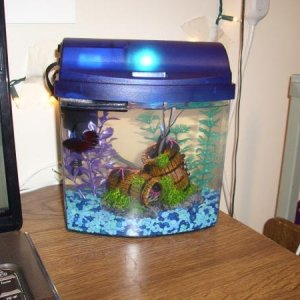 This is Philson's tank. It fits perfectly on my desk and I imagine it's much better than the 8oz cup he was in when I bought him.