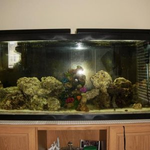 55 gallon salt water tank