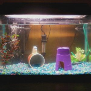 Misters new and improved home, redecorated.