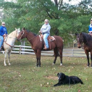 "Three of our horses & the ""old man"". (I've had our lab since I was in 3rd grade... Im 2nd year in college now.)"