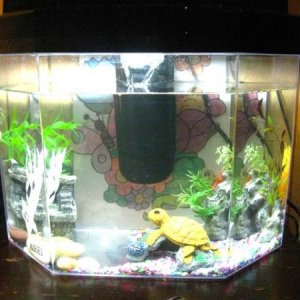 His Tank one side is his zen area the other his fun exotic area
