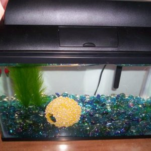 FLOWER BALL IN SPARKLE'S TANK