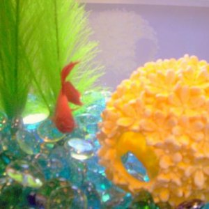 SPARKLE CHECKING OUT HIS FLOWER BALL