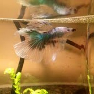 Tesla building his bubble nest!