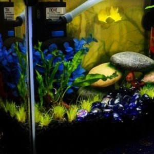 07/29/12 Dwarf hairgrass planted today, Java Fern been there a while, Guppy is under his bridge in the blue glass river. :)