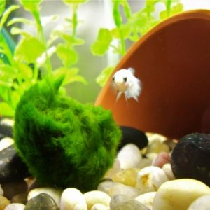 Solace and the Marimo Ball Dec. 29th 2009 RIP :(