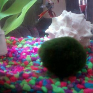 Gus and Toast with Marimo Ball