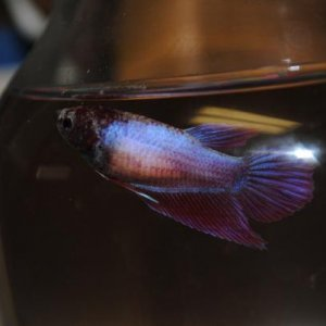 Flo the little rescue