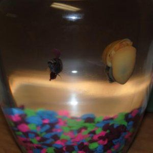 Flo and Norman saying hello