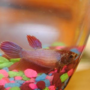 Flo with her gravel