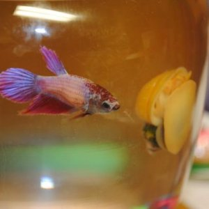 Flo and Norman