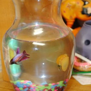 The temporary holdings. This is what my friend kept her in. I am in the process of buying and setting up an aquarium for her.