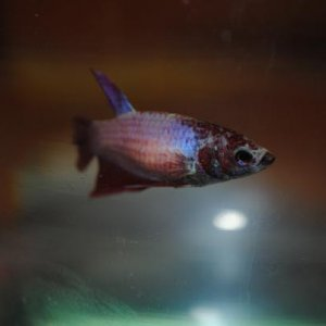 Eyeballing the gigantic black camera. lol