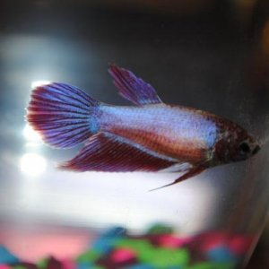 Such a pretty little fish