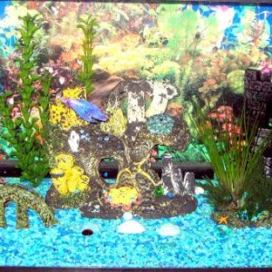Nibbler's tank. We've had the decorations for 4 years, so the paint is fading on them.
