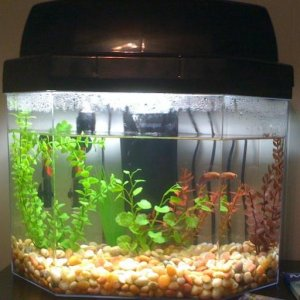 Charlies new/current tank.