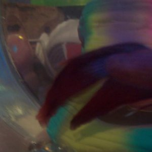 His fins I am Worried about sorry u cant see the issue
