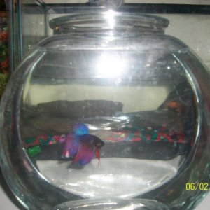 him in a 1gallon:)