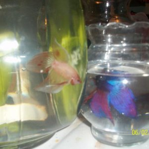 my brothers betta and shadow:)