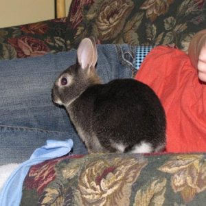 Cadbury my dwarf mix bunny he is a clown