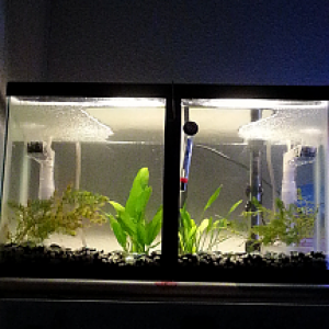 Got the divider in and a few good hiding places, fish should be in tomorrow or the day after