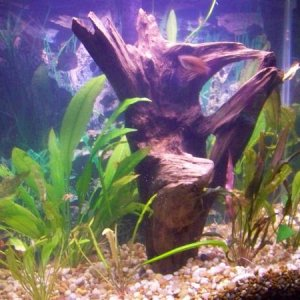 More plants and driftwood and a few fish