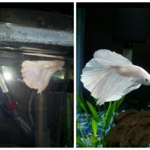 Before and after sneauxs fin rot