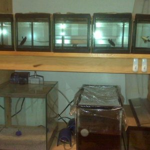 MY breeding Tanks