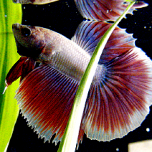 Finally see his lovely fins <3