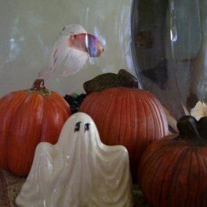 Gary is haunting the Pumpkin Patch with his Pal Ghosty LOL! (RIP Gary 10-17-11)