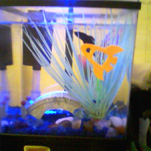 My Fish tank with Marlin (deceased)  swimming in it.