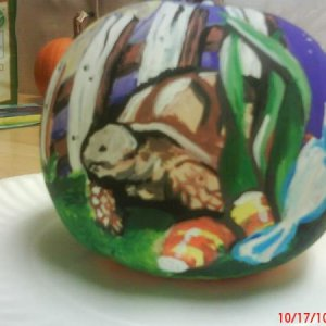Just a lil pumpkin decorating for work...my lil sulcata