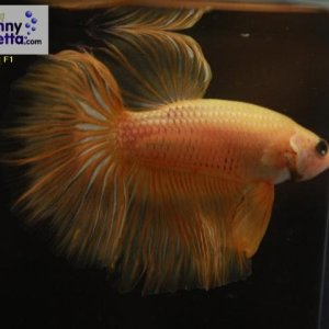 male 18 Please contact my via PM or E-mail if you would like to adopt this betta.